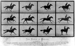 Eadweard J. Muybridge-T182 de ani de la nasterea lui Eadweard J. Muybridge