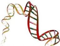 Savanţii au descoperit secretul unei vieţi mai lungi stiinta