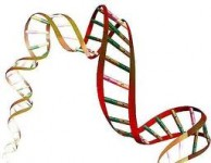 Savan�ii au descoperit secretul unei vie�i mai lungi stiinta
