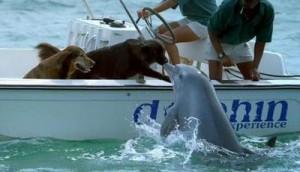 Delfinii, câinii şi elefanţii. Vezi ce îi apropie