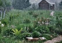 Patriarhia Română cheamă oamenii să se roage pentru ploi