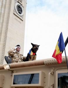 Max, Luptă în Afganistan. Câinele care salvează viaţa militarilor români