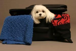 Cum se va călători cu animalele de companie în UE