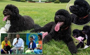 Familia Obama şi-a luat un al doilea căţel, Sunny