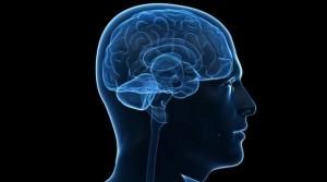 Creierul se micșorează în timpul somnului stiinta