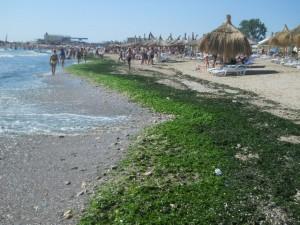 Plaja cu alge in Mangalia-Saturn