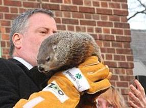 "Chuck, celebrul protagonist al festivității anuale ""Groundhog Day""."