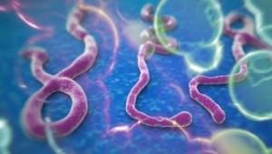Avertisment ONU - Omenirea pierde lupta cu Ebola (foto:jurnalul.md)