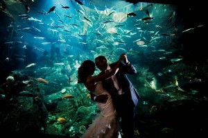 nunta la acvariu