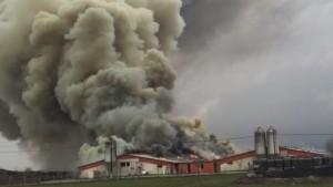 incendiu livada porci ferma