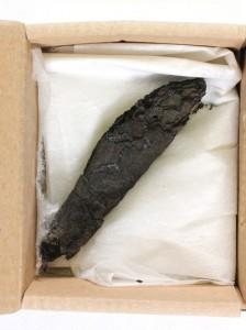 manuscris carbonizat descoperit in ein gedi