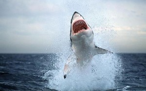 SOUTH AFRICA SHARK ATTACK