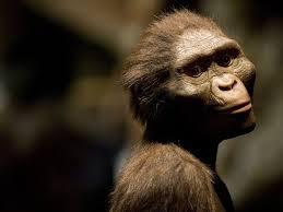 Legătura dintre Lucy (Australopithecus) şi trupa Beatles