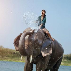 dus cu elefantul