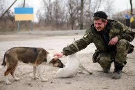 caini pisici ucraina militari