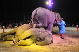 dresura animale circ