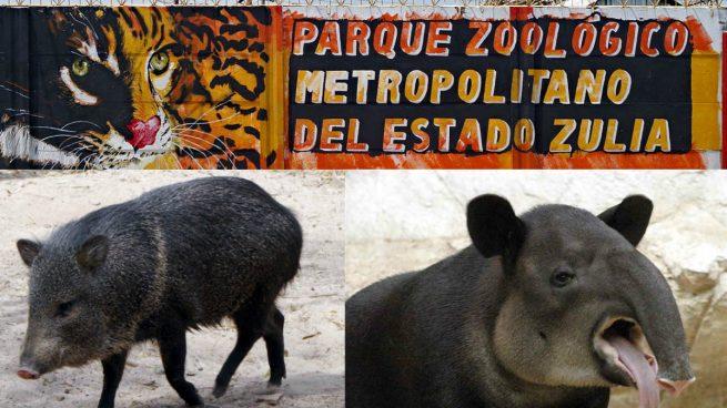 Animale furate de la o grădină zoologică pentru a fi mâncate