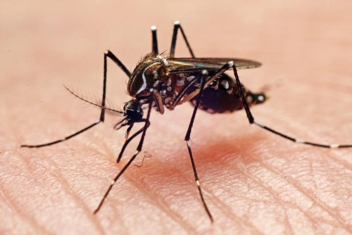 Primul caz de infecţie cu virusul West Nile din acest sezon